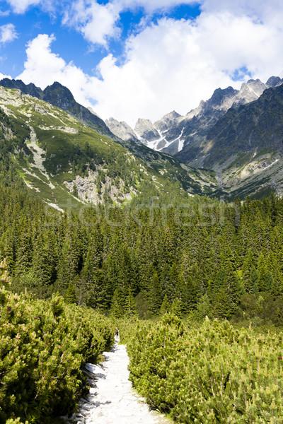 Vallée élevé Slovaquie arbre forêt paysage Photo stock © phbcz