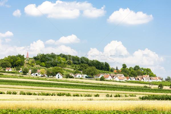 Bor mező alsó Ausztria építészet Stock fotó © phbcz