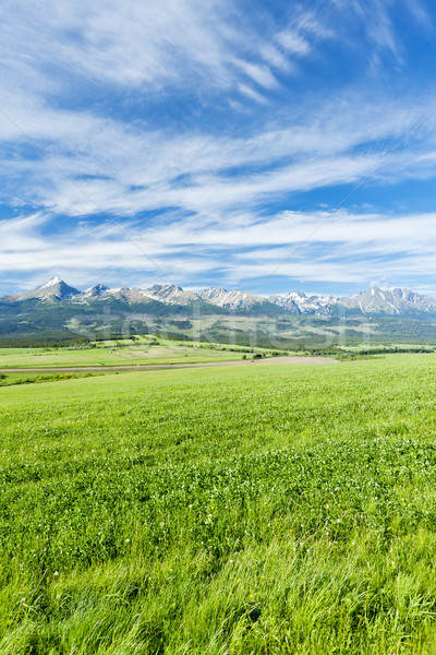 Wysoki Słowacja krajobraz parku łące ciszy Zdjęcia stock © phbcz