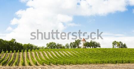 Wijngaard windmolen afdeling reizen Europa wijnstok Stockfoto © phbcz