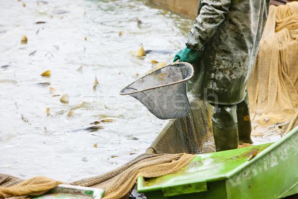 harvesting pond Stock photo © phbcz