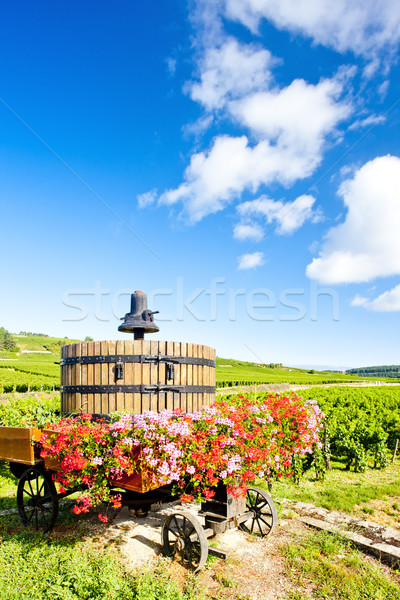 vineyards of Cote de Beaune near Pommard, Burgundy, France Stock photo © phbcz