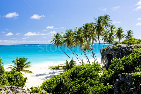 ボトム バルバドス カリビアン ツリー 風景 海 ストックフォト © phbcz