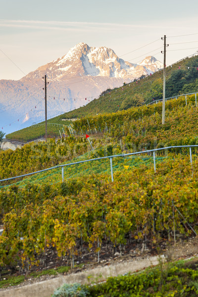 vineyards near Sion, canton Valais, Switzerland Stock photo © phbcz