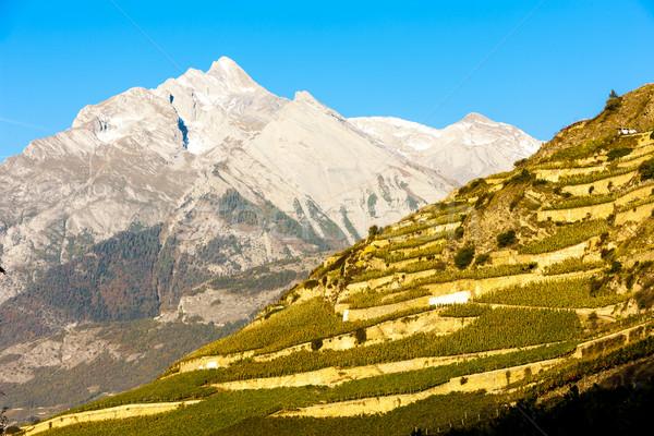 vineyards in Sion region, canton Valais, Switzerland Stock photo © phbcz