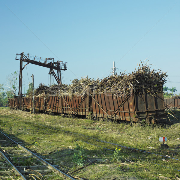 wagons full of sugar cane, sugar railway, Niquero, Cuba Stock photo © phbcz