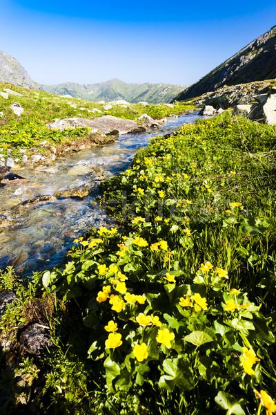 Hlinska Valley, Vysoke Tatry (High Tatras), Slovakia Stock photo © phbcz