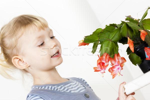 Portrait peu Noël cactus fleur fille Photo stock © phbcz
