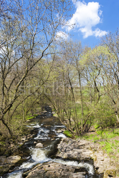 spring landscape with Vyrovka brook, Czech Republic Stock photo © phbcz