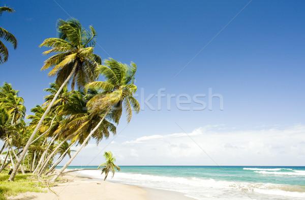 Stock fotó: Grenada · fa · tájkép · tenger · nyár · pálma