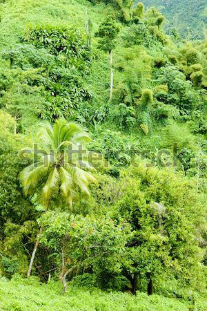 Grenada caribbean bos landschap palm reizen Stockfoto © phbcz