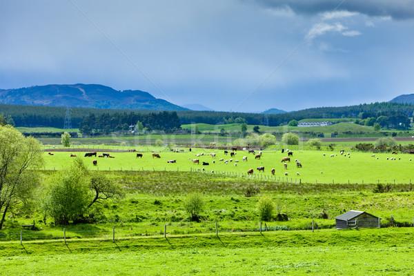 Paisaje valle tierras altas Escocia Foto stock © phbcz