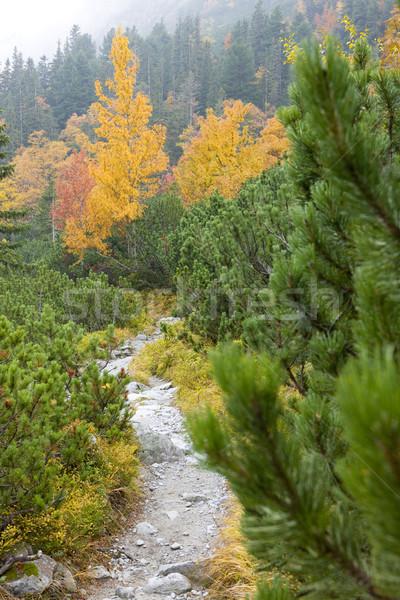 Great Cold Valley, Vysoke Tatry (High Tatras), Slovakia Stock photo © phbcz