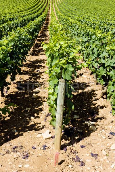 vineyards of Cote Maconnais region, Burgundy, France Stock photo © phbcz