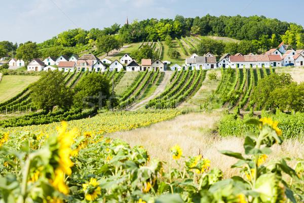 вино снизить Австрия подсолнечника архитектура Европа Сток-фото © phbcz