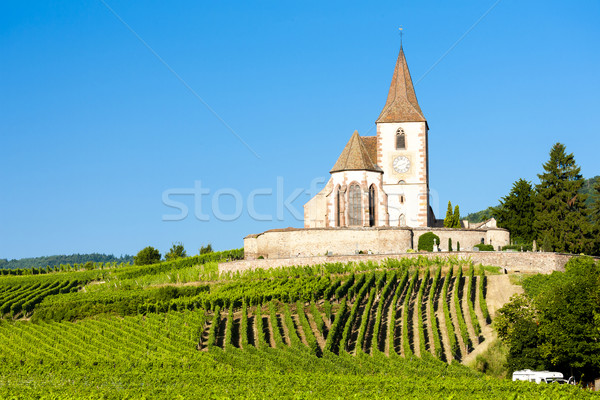 Stock photo: church with vineyard, Hunawihr, Alsace, France