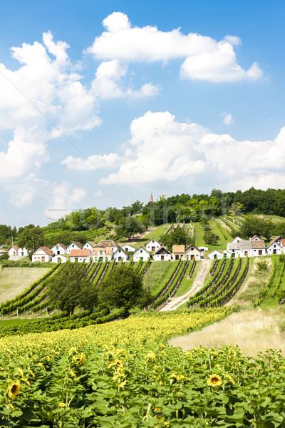 Bor alsó Ausztria napraforgó építészet Európa Stock fotó © phbcz