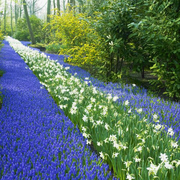 Tuinen Nederland bloem voorjaar natuur park Stockfoto © phbcz