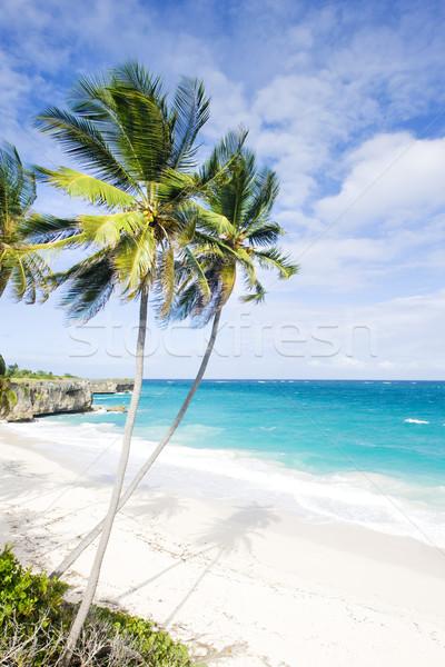 Bodem Barbados caribbean boom landschap zee Stockfoto © phbcz