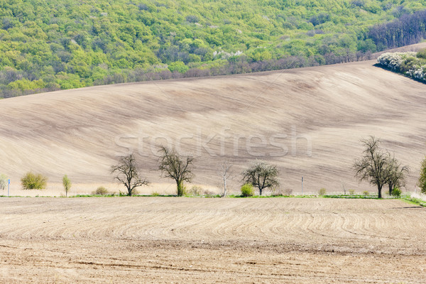 Stock photo: landscape with a field in Southern Moravia, Czech Republic