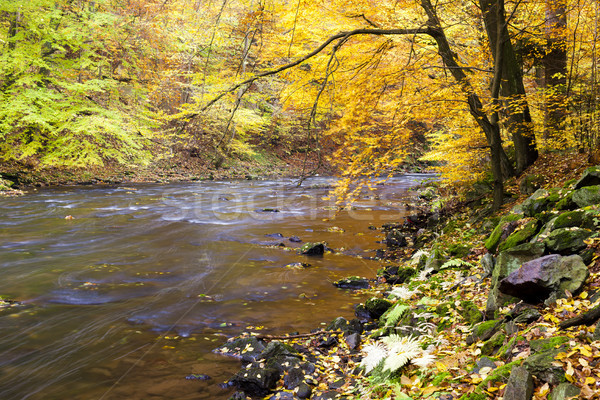 Metuje river in autumn, Czech Republic Stock photo © phbcz