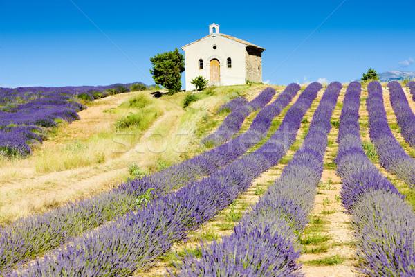 Chapelle champ de lavande plateau France fleur bâtiment Photo stock © phbcz