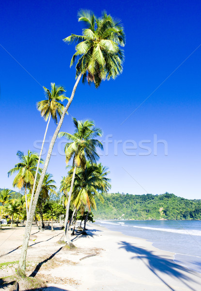 Maracas Bay, Trinidad Stock photo © phbcz