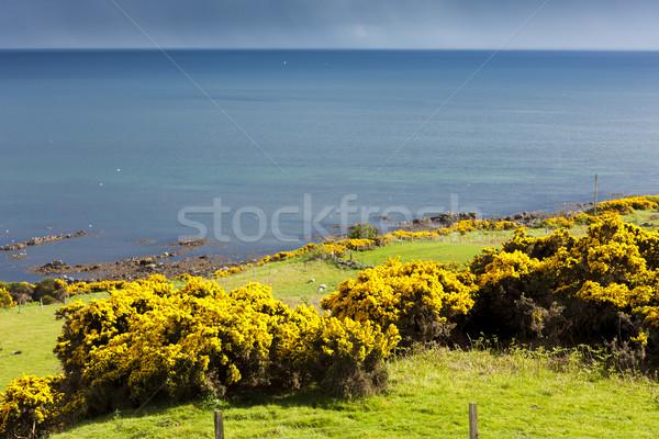 風景 高地 スコットランド 海 ヨーロッパ 海岸 ストックフォト © phbcz