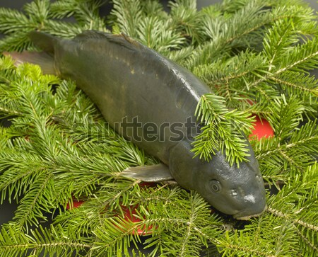 Czech Christmas tradition (Christmas carp) Stock photo © phbcz