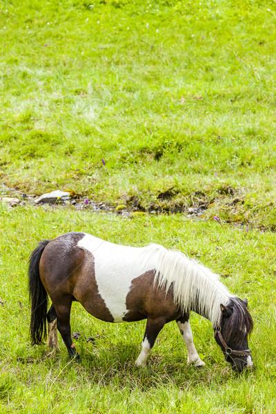 horse on meadow, Piedmont, Italy Stock photo © phbcz