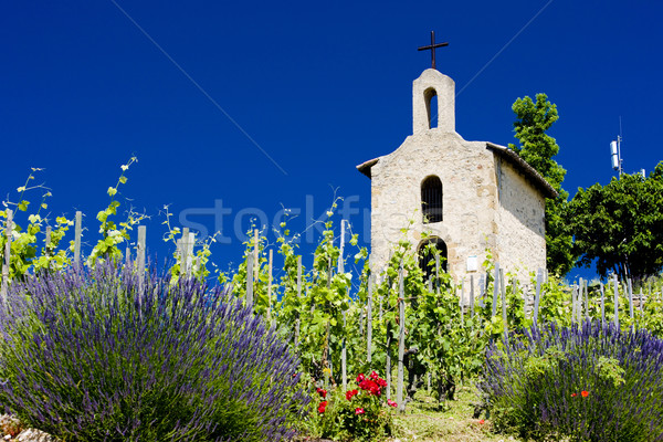 grand cru vineyard and Chapel of St. Christopher, L Stock photo © phbcz