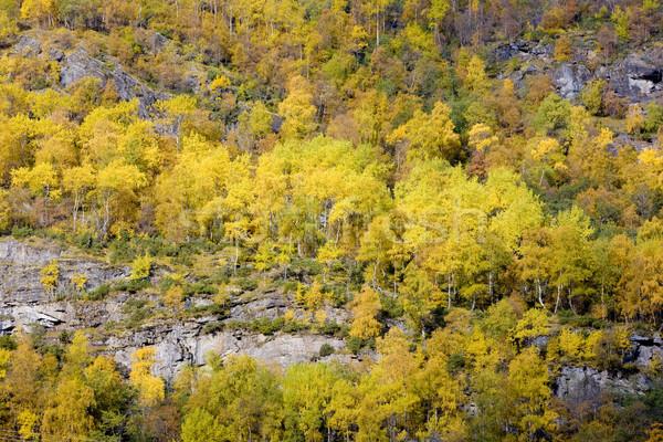 landscape near Borgund Stavkirke, Norway Stock photo © phbcz
