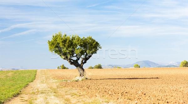 Campo árvore planalto França paisagem europa Foto stock © phbcz