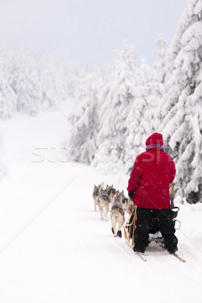 Trenó longo República Checa árvore neve inverno Foto stock © phbcz