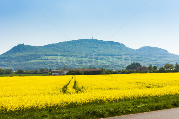 Palava with rape field, Czech Republic Stock photo © phbcz