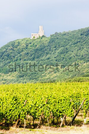 ruins of Skalka Castle near Vlastislav, Ceske stredohori, Czech  Stock photo © phbcz