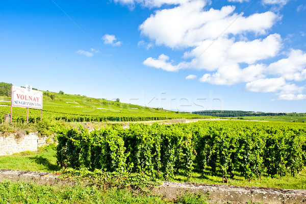 vineyards of Cote de Beaune near Volnay, Burgundy, France Stock photo © phbcz