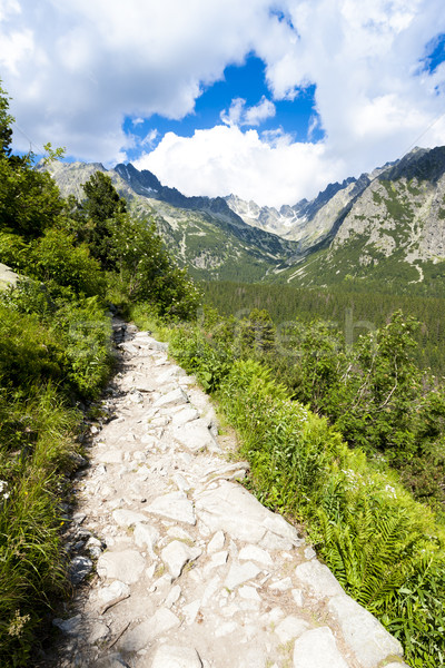 Vale alto Eslováquia árvore paisagem europa Foto stock © phbcz