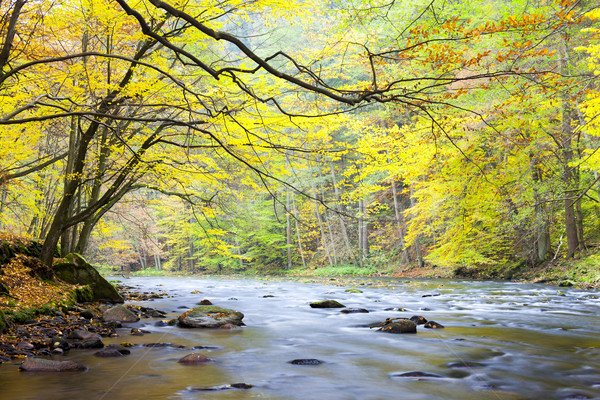 Río otono República Checa agua forestales naturaleza Foto stock © phbcz