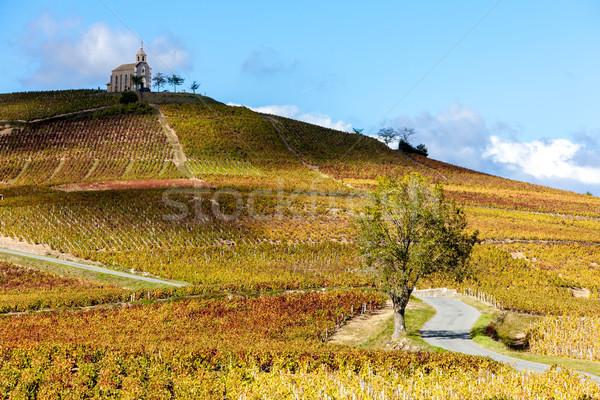vineyards grand cru in Beaujolais witha church, Fleurie, Rhone-A Stock photo © phbcz