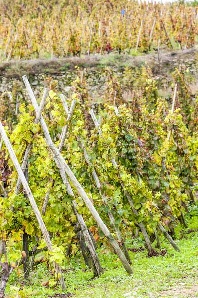 grand cru vineyard of Cote Rotie, Rhone-Alpes, France Stock photo © phbcz