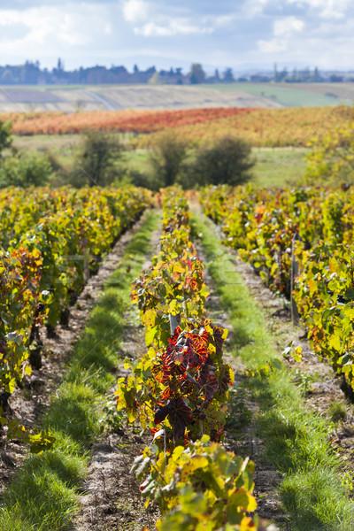 Franciaország tájkép ősz növény Európa szőlő Stock fotó © phbcz