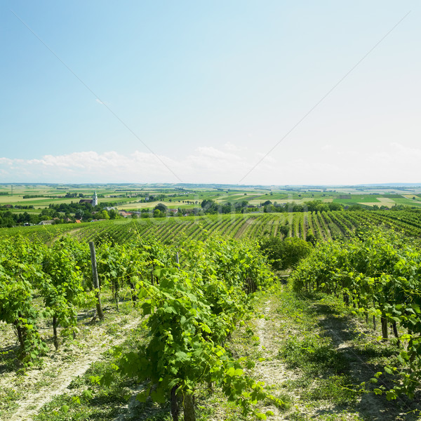 https://img3.stockfresh.com/files/p/phbcz/m/68/1133632_stock-photo-vineyard-unterretzbach-austria.jpg