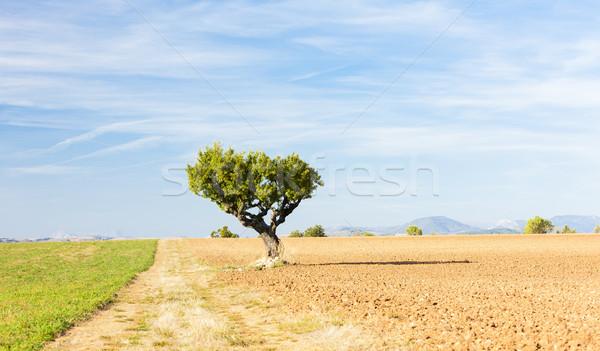 Mező fa fennsík Franciaország tájkép Európa Stock fotó © phbcz