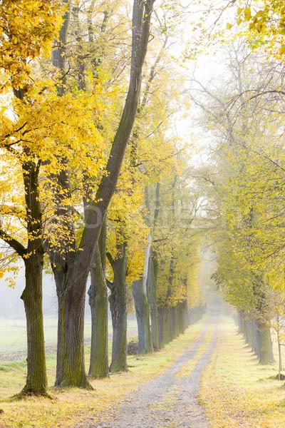 Beco árvore outono planta caminho Foto stock © phbcz