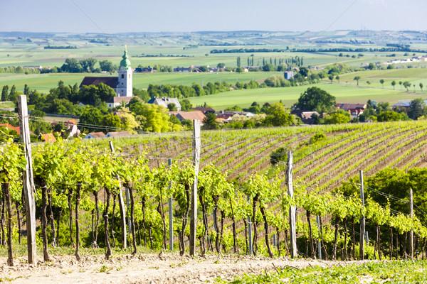 виноградник снизить Австрия пейзаж путешествия стране Сток-фото © phbcz
