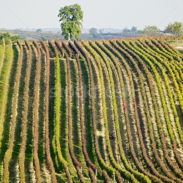 Região República Checa árvore paisagem outono plantas Foto stock © phbcz