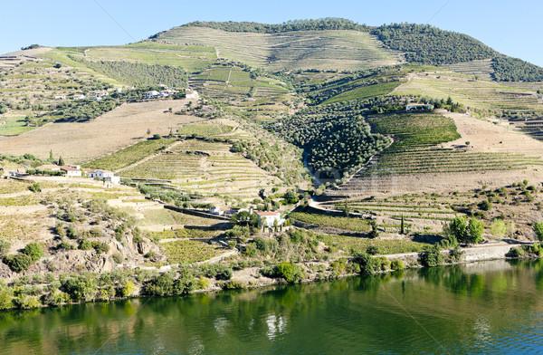 Douro Valley, Portugal Stock photo © phbcz