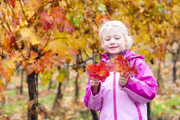 Little girl vinha retrato criança rosa Foto stock © phbcz