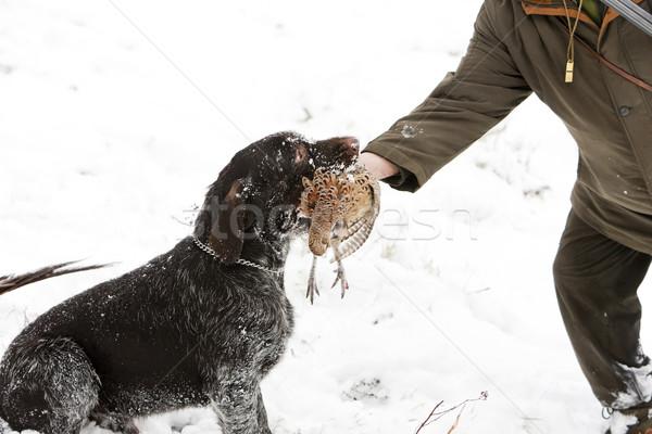Cazador perro caza nieve hombres invierno Foto stock © phbcz
